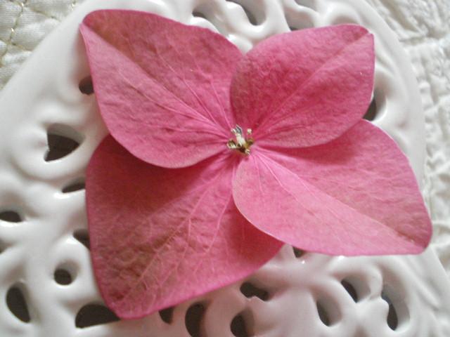 Casa cuori colori ortensie e cuori la mia passione - Ortensie colori ...