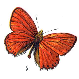 [butterflyhallogfairy3.jpg]
