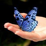 Mariposa azul en tus manos