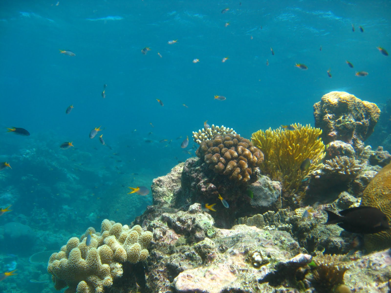 Great barrier reef scuba diving car interior design - Dive great barrier reef ...