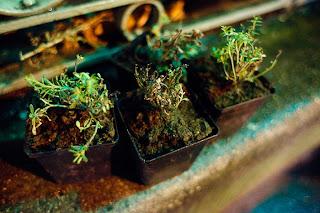 http://4.bp.blogspot.com/_Cc02yncvRmk/S0DKXkCTFaI/AAAAAAAABoQ/IATSgVbds5I/s320/paris+plantes+GuerrillaGardening_ParPierreMorel.jpg