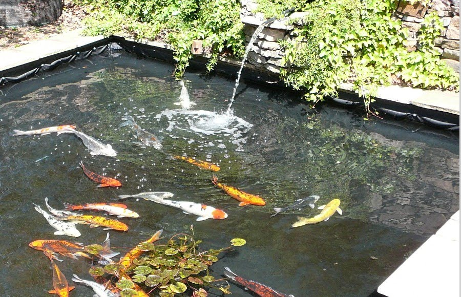 New tarps world building a fish pond using used billboard for Building a koi pond
