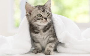 Cute Cats HD Wallpapers 04 Images, Picture, Photos, Wallpapers
