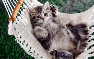 Cute Cats HD Wallpapers 09 Images, Picture, Photos, Wallpapers