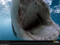 Shark Mouth Images, Picture, Photos, Wallpapers