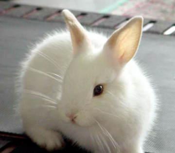 اجمل صورة لأرنب أبيض
