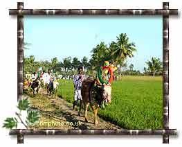 uzhavar thirunal essay in tamil