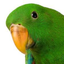 Parrot Secret