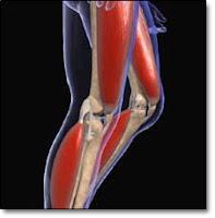 Bacak Kası