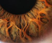 Göz İris