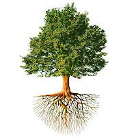 ağaç, ağaç köküyle birlikte