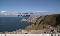 "Documental ""El Cormorn Moudo Asturiano"""