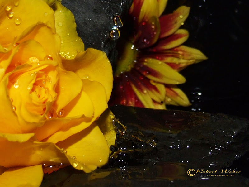 tears & roses