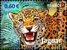 Le Jaguar de Guyane
