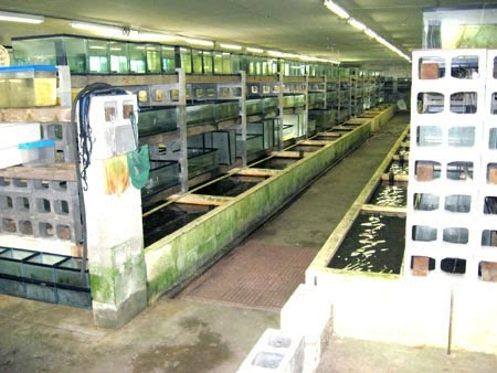 The florida land report sold fish farm zolfo springs fl for Fish farms in florida