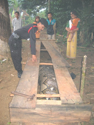 world largest anaconda