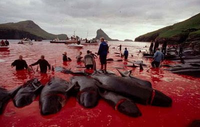 Merciless killing of Dolphins