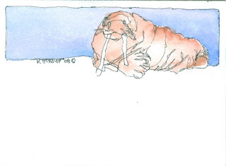 Walrus Watercolor Painting