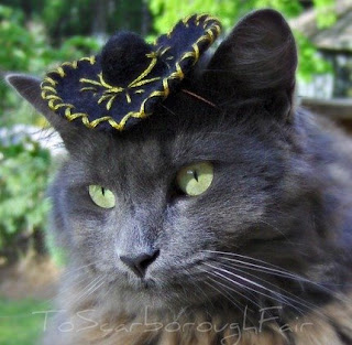 Funny Hats for Cats