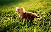 wallpaper gato