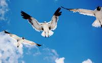 papel de parede passaros voando