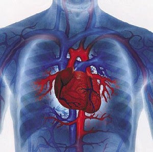 heart disease 300x297 Lemah Jantung