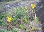 Orqideas em seu habitat natural - Zona da Mata mineira