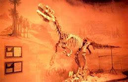 Cretacico.