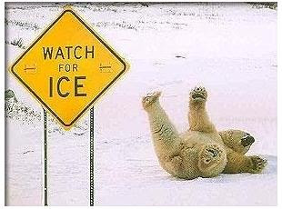 newfie jokes and all da funniest pictures funny polar bear
