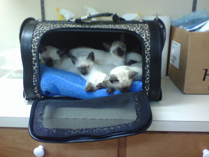 good little kittens, at the vet