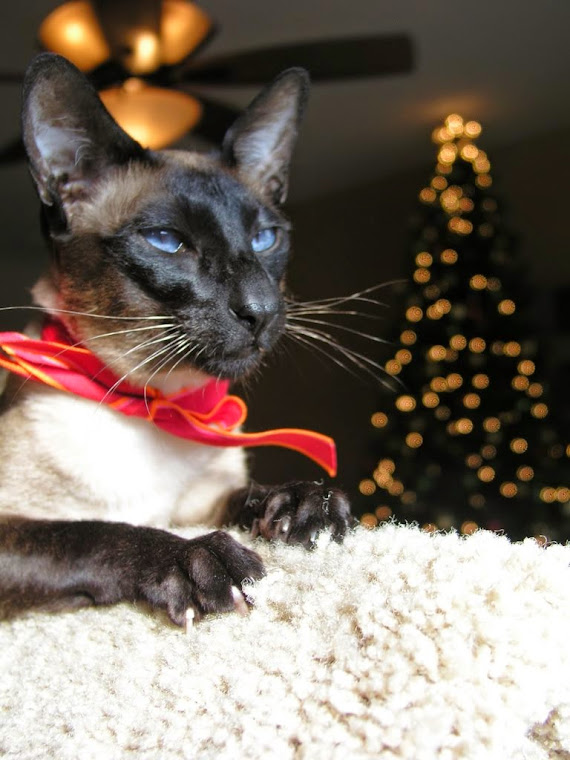 Carolina Blues Cattery would like to wish all of our blog viewers a very Happy Holiday season!