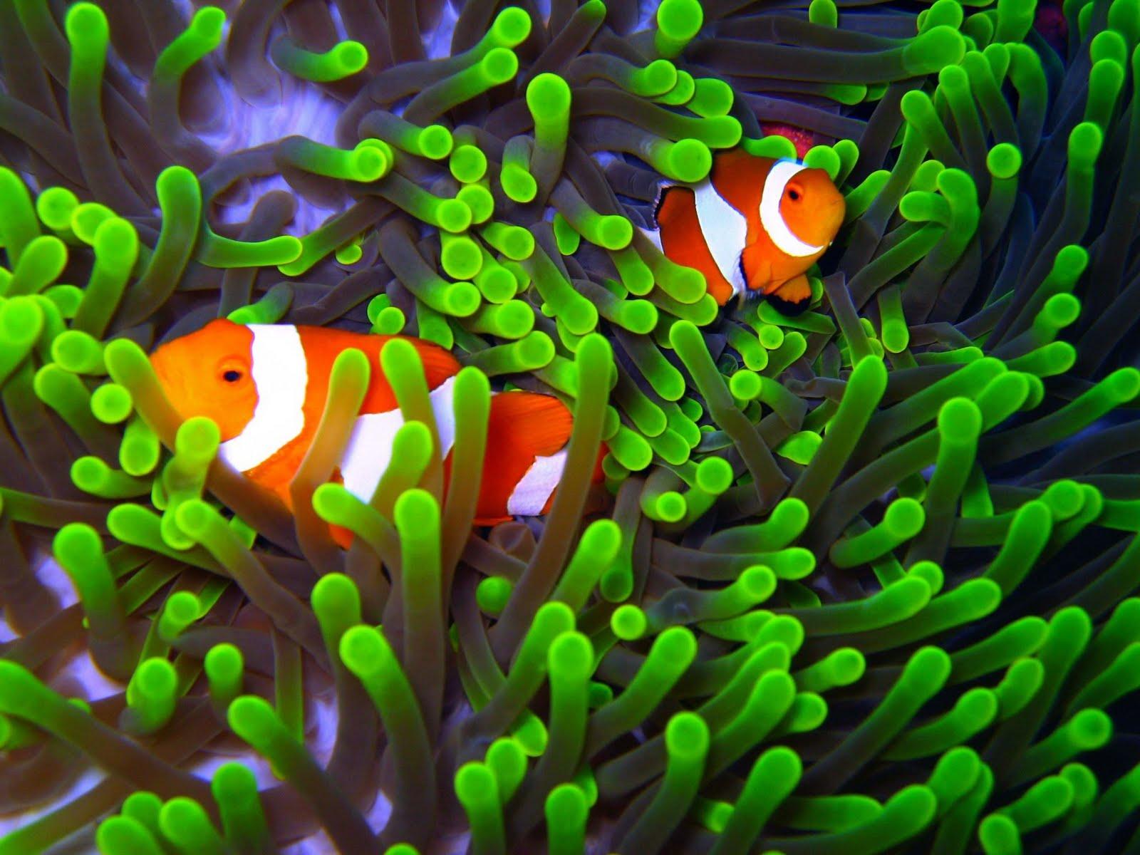 Wakatobi National Park and Diving Resort is Most Beautiful Scenery in the world, Wakatobi National Park and Diving Resort are Most Beautiful Scenery in the world