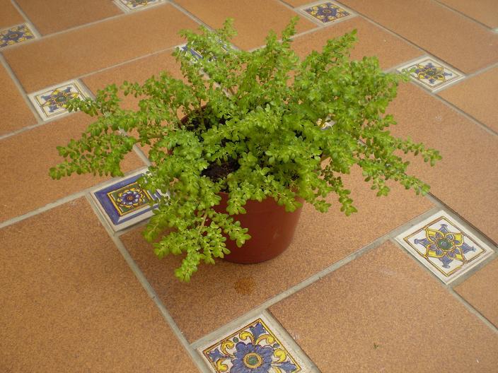 Los seres vivos reino vegetal - Plantas con flor de interior ...