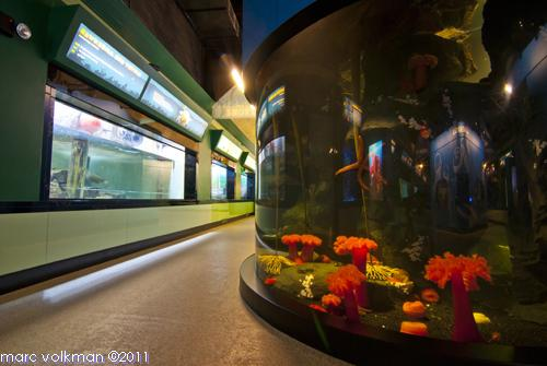 Texas State Aquarium Coupons 2016 2017 Best Cars Review