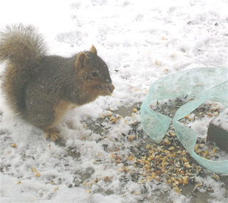 Christmas Squirrel Smorgasbord