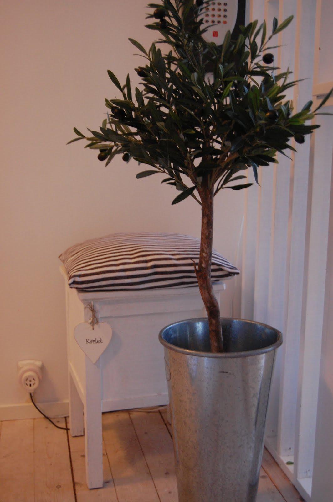 olivträd plast