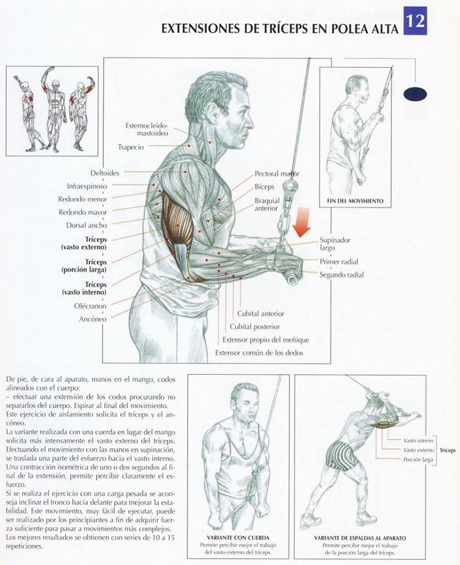 EJERCICIOS PARA TRICEPS. La variante realizada en las extensiones de triceps