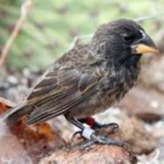 Nueva información sobre el origen de las especies