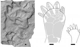 Icnitas de tetrápodos de hace 395 millones de años halladas en una antigua cantera de Polonia.- PER AHLBERG ET AL.