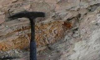 Fósil en Argentina revela misterios de un río prehistórico