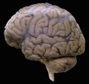 Una siesta fortalece el funcionamiento cerebral