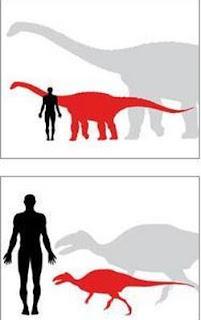 Los dinosaurios enanos Magyarosaurus (gris) y Zalmoxes (rojo), en la imagen de abajo, eran mucho más pequeños que sus familiares más cercanos en el continente / Simon Powell