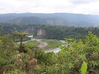 Talar la Amazonia amenaza el planeta