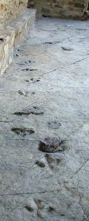Huellas de dinosaurios de hace 145 millones de años
