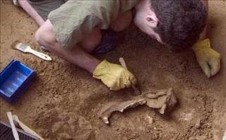 Descubren una nueva especie de dinosaurio herbívoro en la Patagonia argentina. EFE