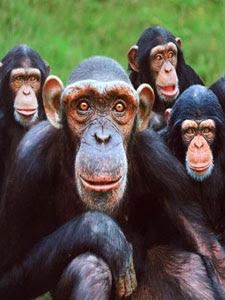 El lenguaje humano, una de nuestras grandes diferencias con los primates