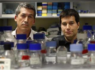 Alberto López-Bueno, a la izquierda, y Antonio Alcamí, en su laboratorio del Centro de Biología Molecular Severo Ochoa de Madrid - CRISTÓBAL MANUEL