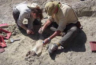 Fósiles que pueden cambiar la historia de la evolución del ser humano
