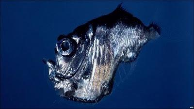 Vida submarina en la Gran Barrera de Coral