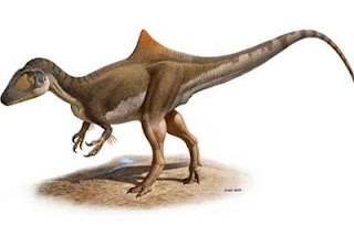 Concavenator corcovatus (Pepito), nuevo dinosaurio carnívoro. RAÚL MARTÍN